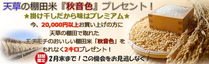 棚田米『秋音色』プレゼント!