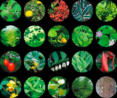 113種類の天然素材の恵み、「植物発酵物」配合